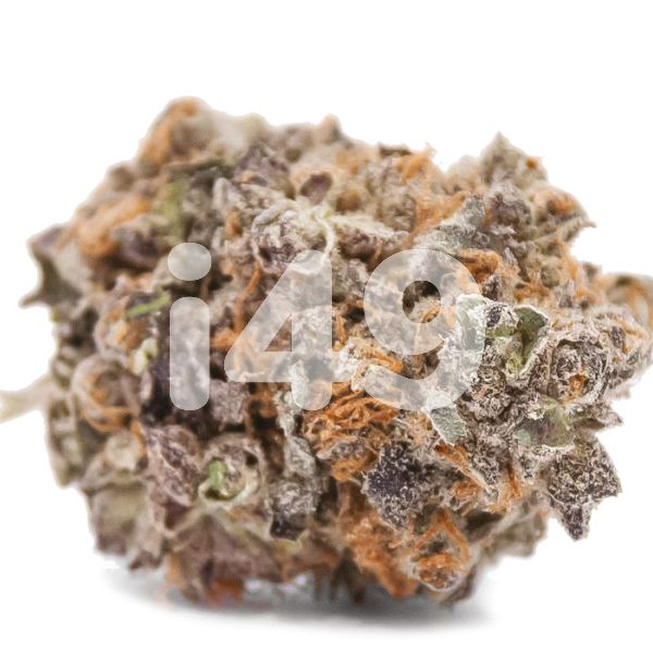 Black Water Purple OG Cheese_1