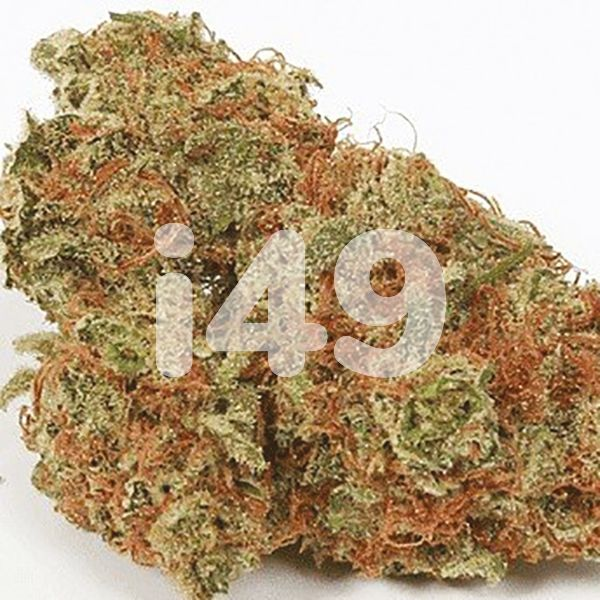 Buy Mochalope Strain Seeds in the USA